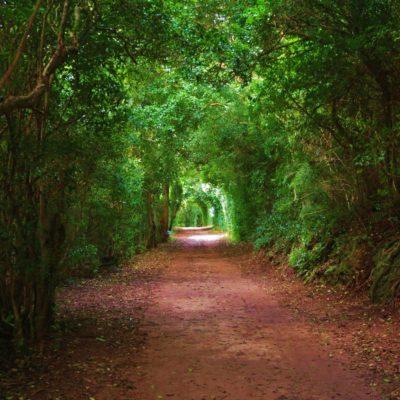Railway Trail - 35 - Roland Skinner Bermuda Photography