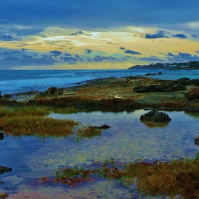 Palm Grove - 98 - Roland Skinner Bermuda Photography