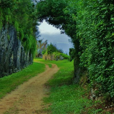 Railway Trail - 137 - Roland Skinner Bermuda Photography