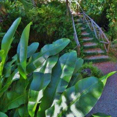 Arboretum - 158 - Roland Skinner Bermuda Photography